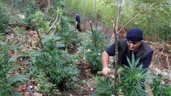 policiers-albanais-detruisent-un-champ-de-cannabis-dans-les-montagnes-pres-de-kruje-le-21-septembre-2016